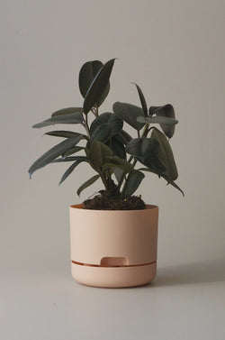 Let this Pale Apricot 17cm Self Watering Pot do the hard work for you from Mr Kitly x Decor.