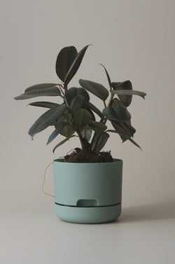 Let this Cabinet Green 17cm Self Watering Pot do the hard work for you from Mr Kitly x Decor.