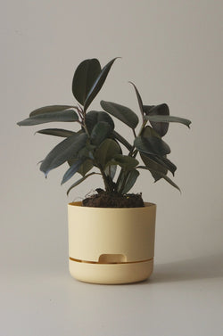 Let this Bluff 17cm Self Watering Pot do the hard work for you from Mr Kitly x Decor.