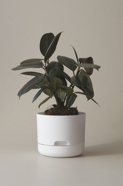 Let this White 17cm Self Watering Pot do the hard work for you from Mr Kitly x Decor.