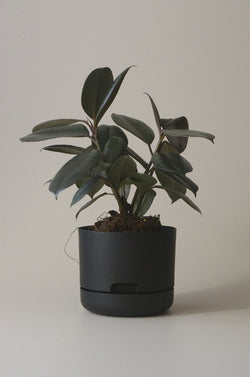 Let this Black 17cm Self Watering Pot do the hard work for you from Mr Kitly x Decor.