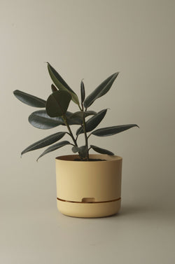 Let this Bluff 25cm Self Watering Pot do the hard work for you from Mr Kitly x Decor.