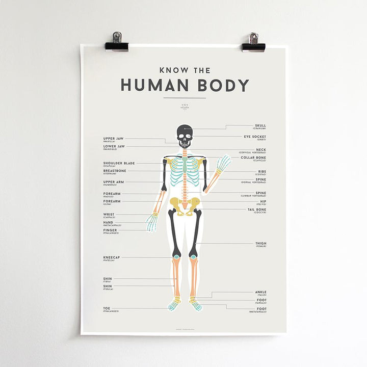 Here to help master the bones of the body is the Human Body Squared Chart from We Are Squared!
