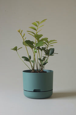 Let this Moss Green 21.5cm Self Watering Pot from Mr Kitly do the hard work for you!
