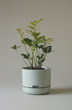 Let this Fog 21.5cm Self Watering Pot from Mr Kitly do the hard work for you!