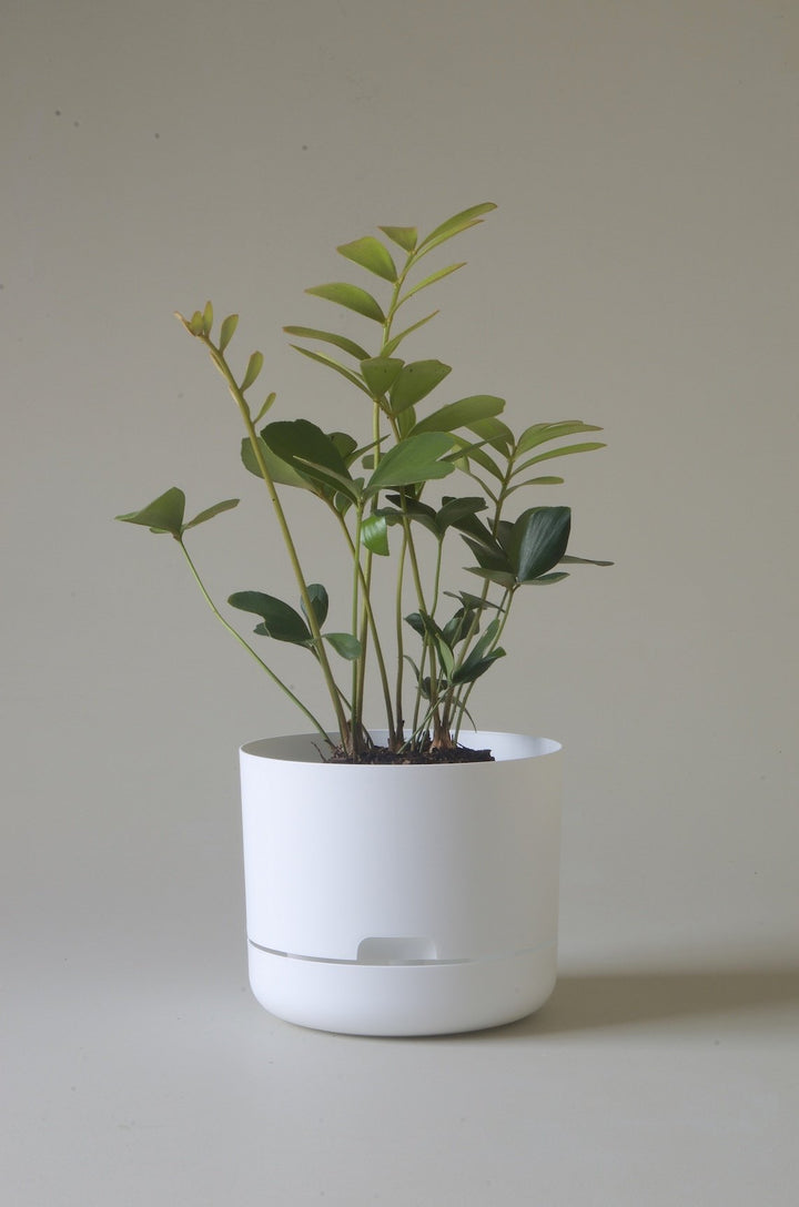 Let this White 21.5cm Self Watering Pot from Mr Kitly do the hard work for you!