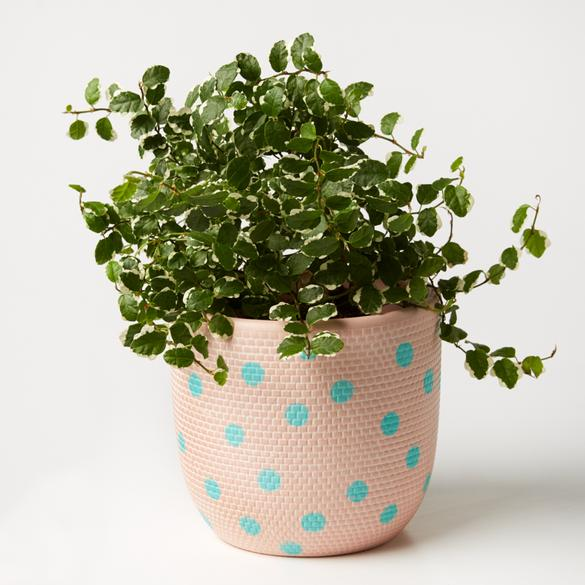 All your patio needs is a little lift from the Aqua Spot Nectarine Pot by Jones & Co!