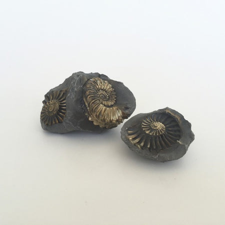 pyritized ammonite place 8 healing