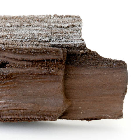 Petrified Wood with Quartz Druze