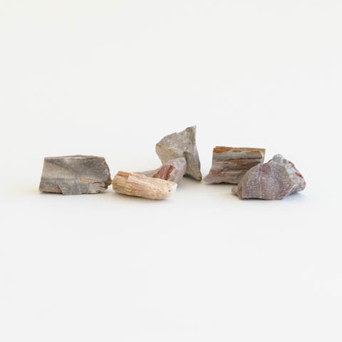 Petrified Wood - Pocket Stone Set