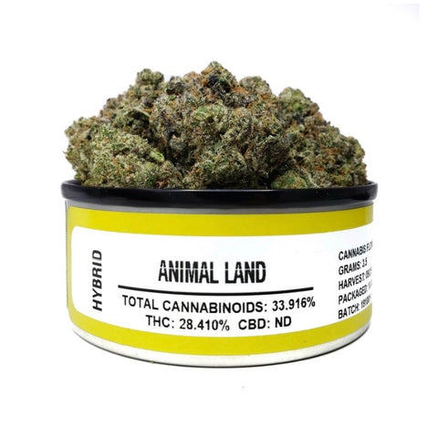 ANIMAL LAND - SPACE MONKEY MEDS *NEW*
