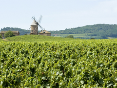 Wines from Other French Regions