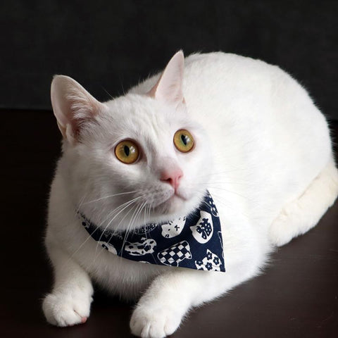COCOLUCK  Cat Bandana CO-6197-NAVYCAT