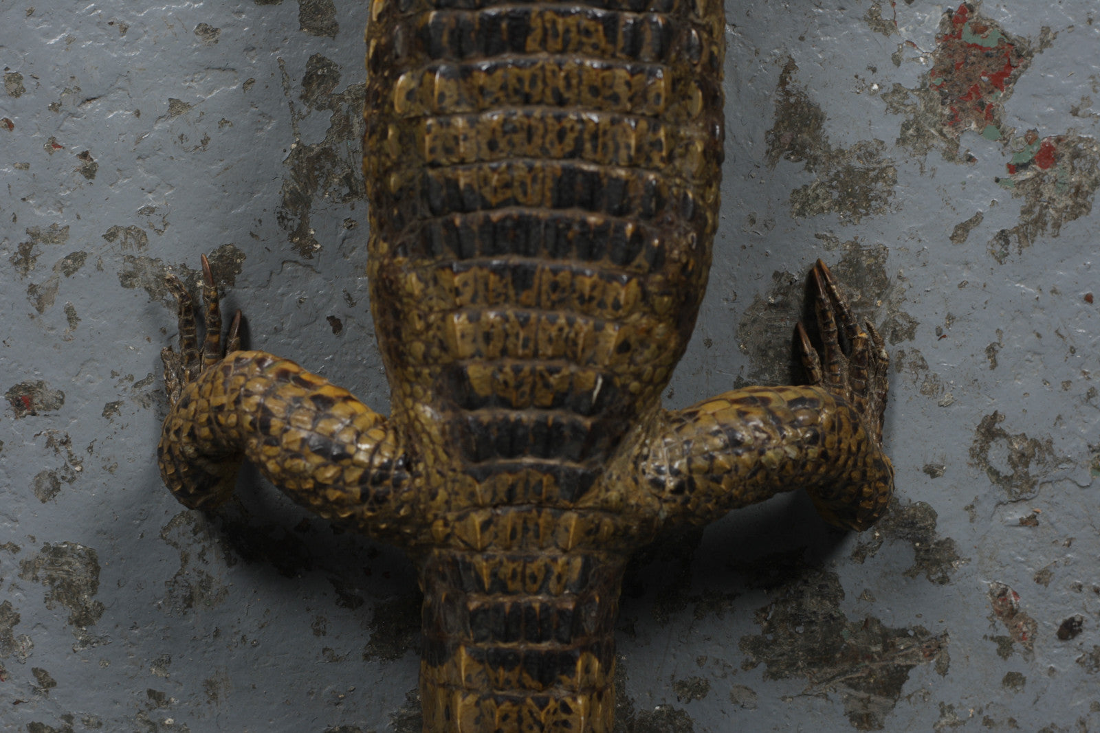 Vintage small taxidermy crocodile available for sale from Industrious Interiors, an online vintage furniture and homeware store based in Nottingham