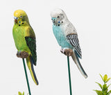 Budgies on a metal stake, two different colours yellow green or Blue white