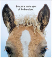 Little book of Heavenly Horses - By Affirmations - Page reads : Beauty is in the ey of the the beholder. Photo of a horses face