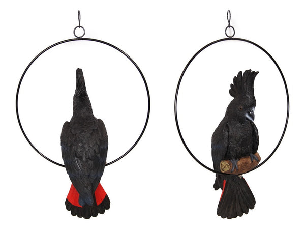 Beautiful black cockatoo, with beautiful red tail. 43cm high in a 30cm ring. Fantastic for trees or pergola.