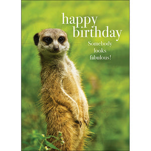 Beautiful presented card  Happy Birthday - Somebody looks fabulous!  Inside Verse - Absolutely Fabulous!