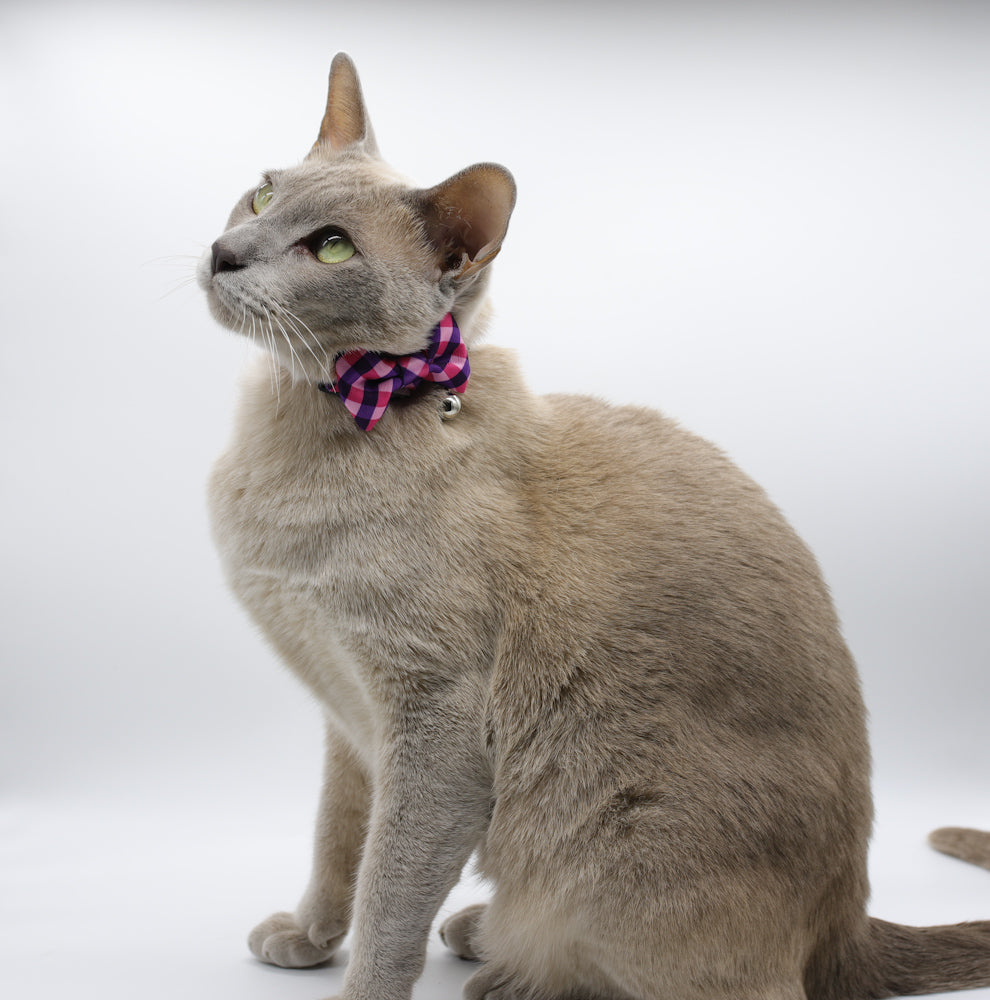 Fashionista Cat Collars by Soapy Moose