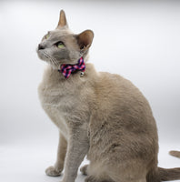Beautiful Fashionista Cat and Kitten collars. Comes with detachable bow and a bell.