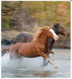 Little book of Heavenly Horses - By Affirmations - Photo of 2 horses running through water
