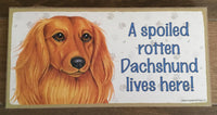 Sign with an image: A spoiled rotten Dachshund lives here! (Long haired)
