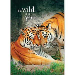 Affirmation Card - Beautiful presented card  I am wild about you!  Inside Verse - you beautiful creature!