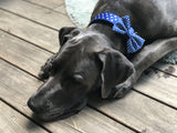 Soapy Moose Dog Collars Blue and white polka dot various sizes