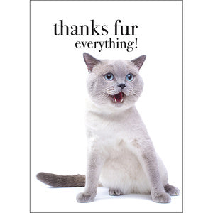 Affirmation Card - Beautiful presented card  Thanks fur everything!  Inside Verse - You're cat-urrific!