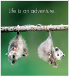 Little book of Baby Wonder - by Affirmation - pages reads Life is an adventure