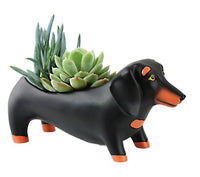 Baby OTIS Dachshund Planter by Rikaro - W 21cm.  Great additions to any house or garden.
