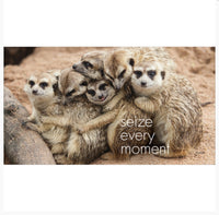 Little book of Meerkat Magic - By Affirmations - Page reads: Seize every moment. Photo of 7 meerkats clasping to each other in a line