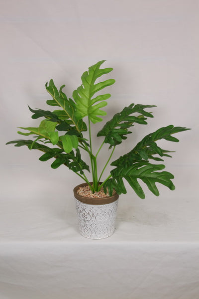 Fern - White Filigree Pot