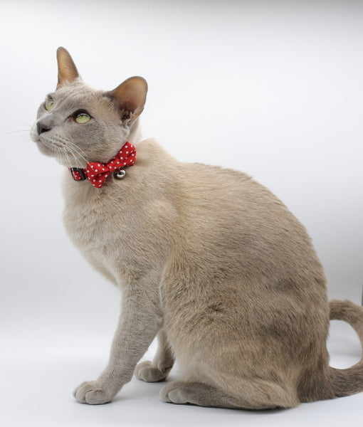 Red & White Polka Dot Cat Collar by Soapy Moose