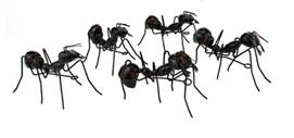 Metal Walking Ants