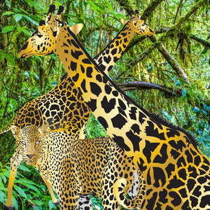 Two Gold Giraffes with Leopard