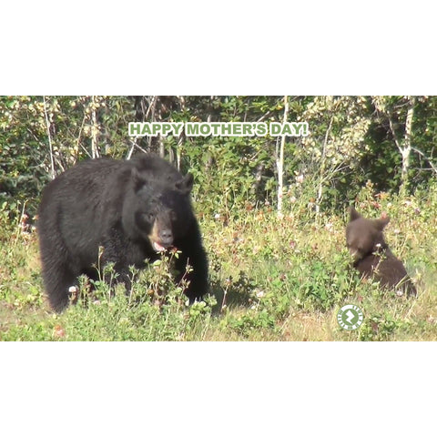 Zapz Mother's Day Bear and Cub Augmented Reality Greeting Card