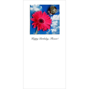 Buggles Bee and Gerbera Birthday Greeting Card 'Happy Birthday, Flower'