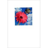 Buggles Gerbera and Bee Thank You Greeting Card