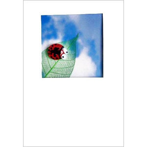 Buggles Ladybird on Leaf Greeting Card