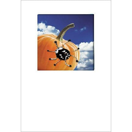 Buggles Spider on Pumpkin Halloween Greeting Card