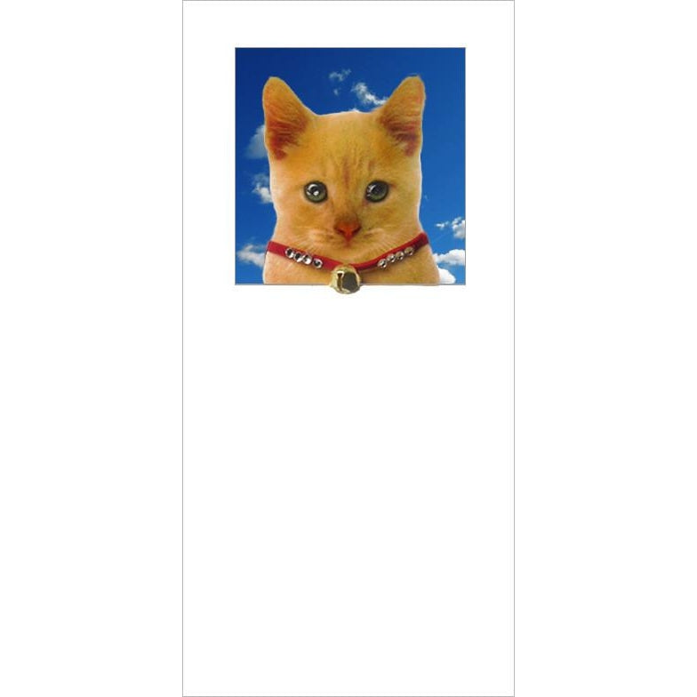 posh pawz ginger cat kitten greeting card