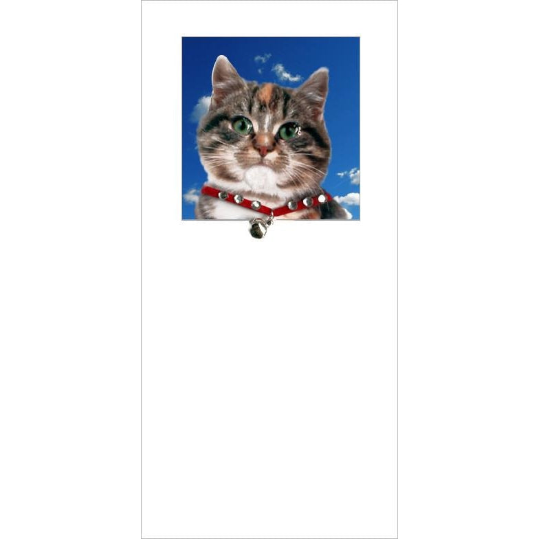posh pawz tabby kitten cat greeting card