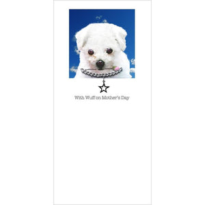 posh pawz bichon friese puppy mothers day card