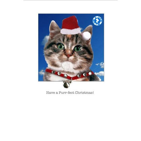 Posh Pawz Christmas Kittens Augmented Reality Greeting Card