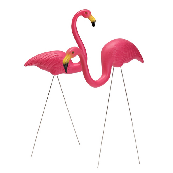 Flamingo Crazy - Birds of a feather flock together!