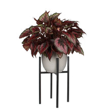 Ascot Plant Stand