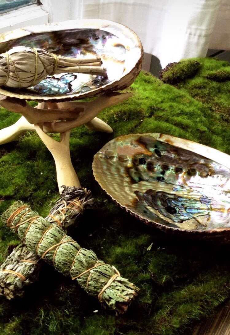 Abalone Shells & Stands