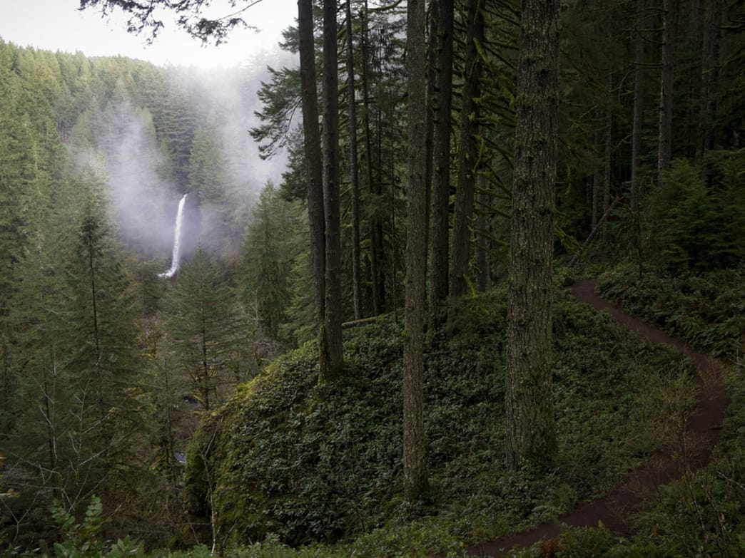 Silver Falls State Park in Winter: 3 Reasons Why You Should Visit Now