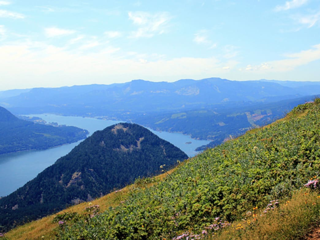 5 of the Best Wildflower Hikes Near Portland